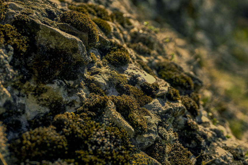 Moss & Lichen Rock Formation Camouflage Close-up Day Full Frame Growth Nature No People Outdoors Plant Rock Selective Focus Solid Stones Textured