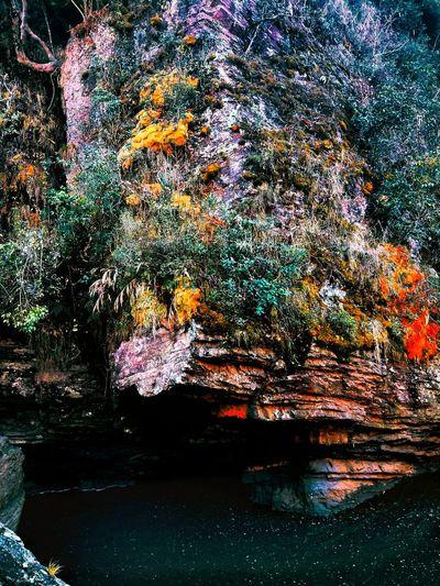 EyeEm Best Shots EyeEmNewHere Photography Waterfalls Water Mountains And Sea Green Nature Flowers, Nature And Beauty Nature Photography