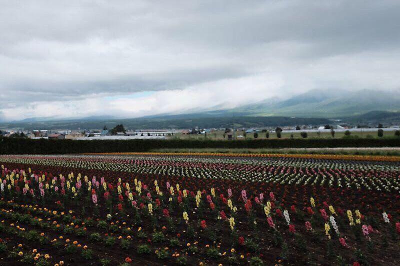 토미타팜 삿포로 추억 라벤다 X-T1 Hokkaido,Japan Farmland