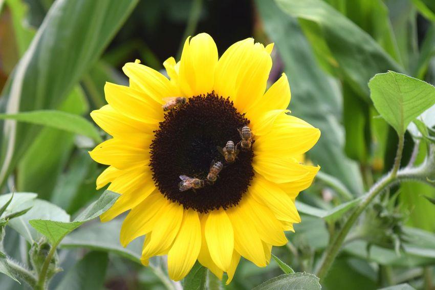 Showcase July Yellow Jaune🌻Plants 🌱 Plantes Bee 🐝 Abeilles LONDON❤