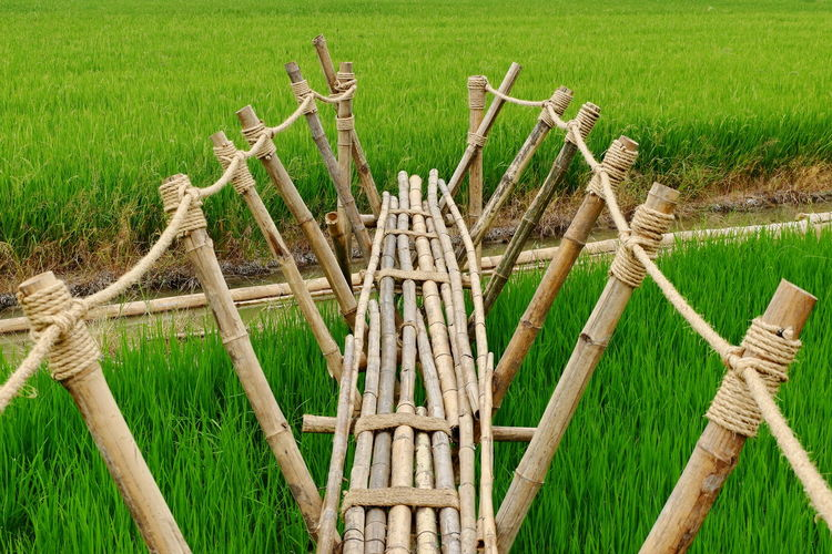 Nature Outdoors Day Bamboo Bamboo - Material View Background EyeEm Best Shots - Nature Wood - Material Knotted Rope Landscape Beauty In Nature Field Nature Nature Photography