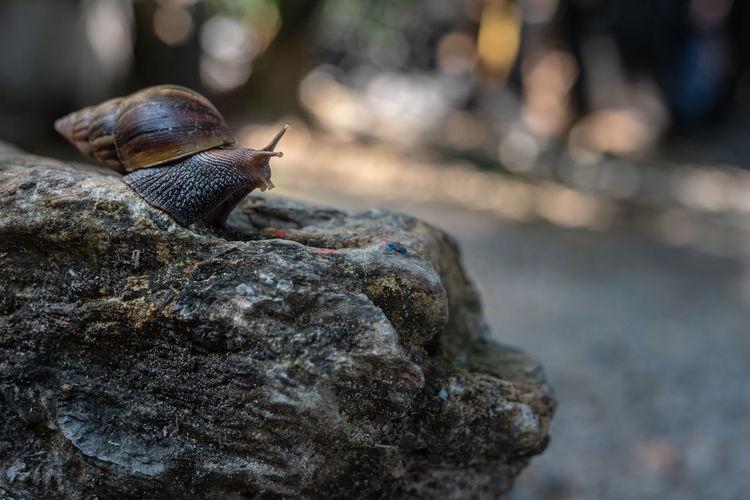 Animal Wildlife One Animal Close-up Rock Snail Nature Animal Shell Animal Shell