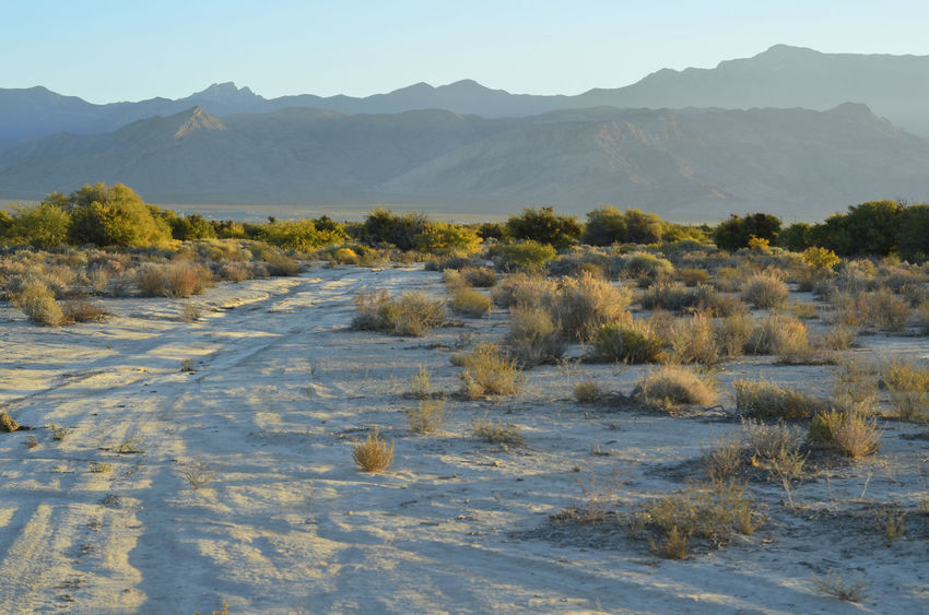 morning light on desert road Mojave Desert Off-Road Beauty In Nature Day Grass Landscape Mountain Mountain Range Nature No People Offroad Outdoors Scenics Sky Tranquil Scene Tranquility