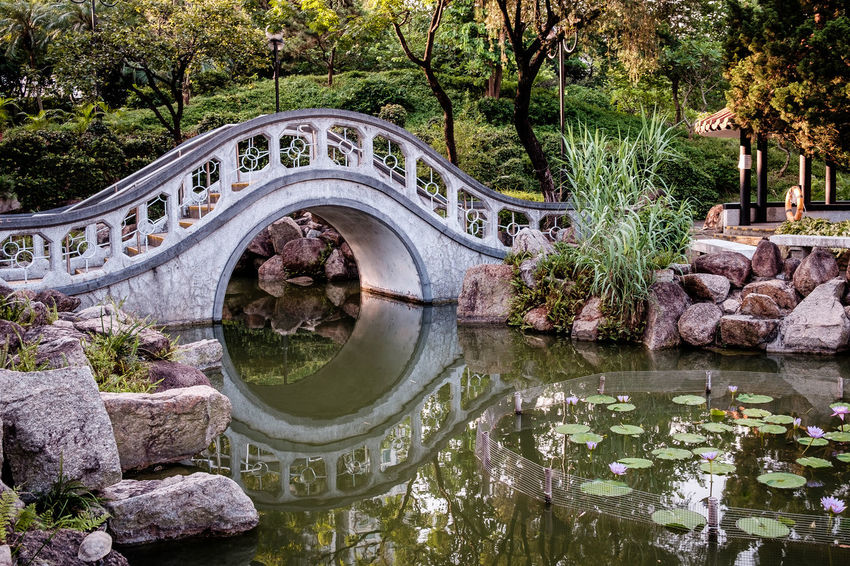 Calm Sha Tin Tranquil Day Nature No People Outdoor Outdoors Park Peaceful Reflection Serene Tree Water