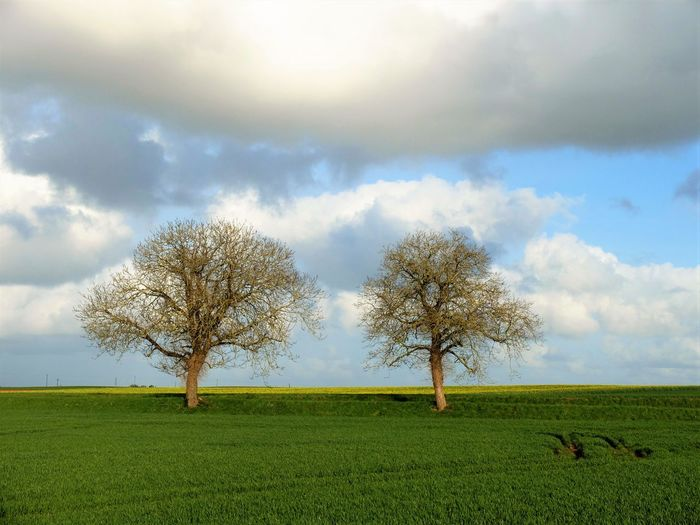 Two Trees On Green Field With Sky