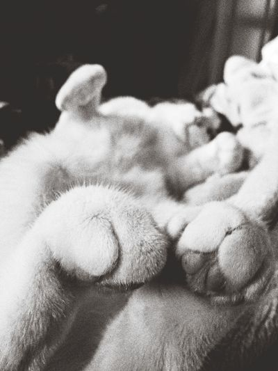 Throwback Cat Moments Black And White