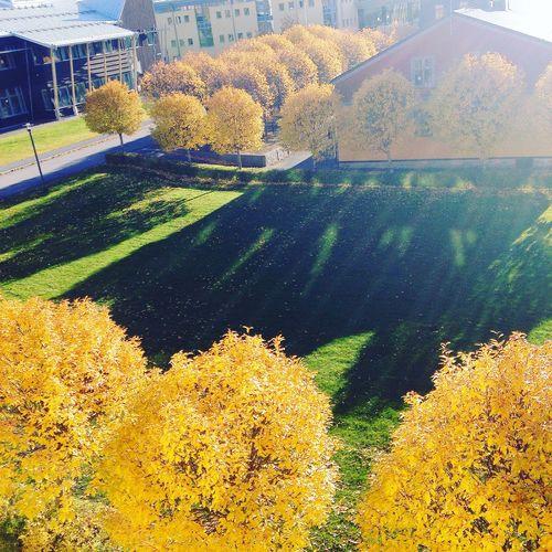 hösten är ganska fin ändå 🌻🍂