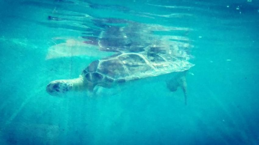 I kid you not, this turtle is named T-Rex. She's named that, for her little front legs. I love her. 😍