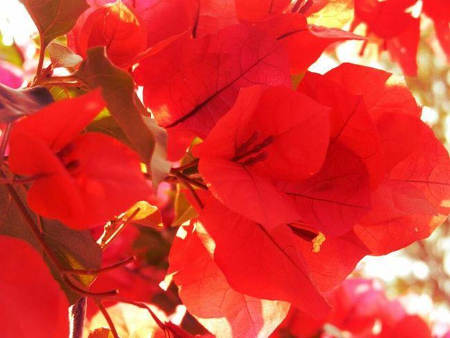 Flowers Nature Bunga Kertas