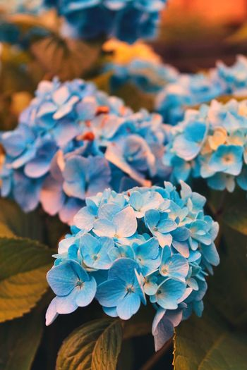 Petal Beauty In Nature Growth Plant Flowering Plant Flower Flower Head Nature Blue No People Day