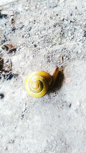 Nature Photography Snail🐌 Eye4photography  First Eyeem Photo Nature_perfection Naturephotography EyeEm Nature Lover Snails🐌 Snail Collection