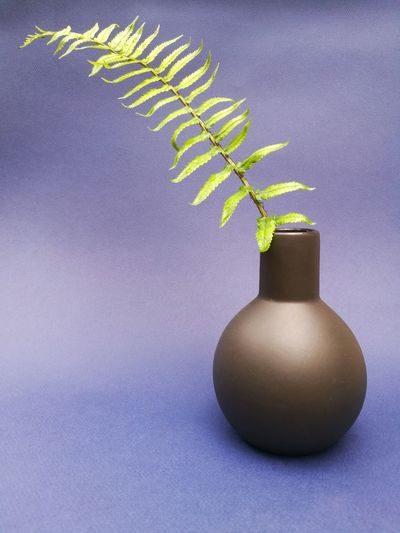 Close-up of vase on table against white background
