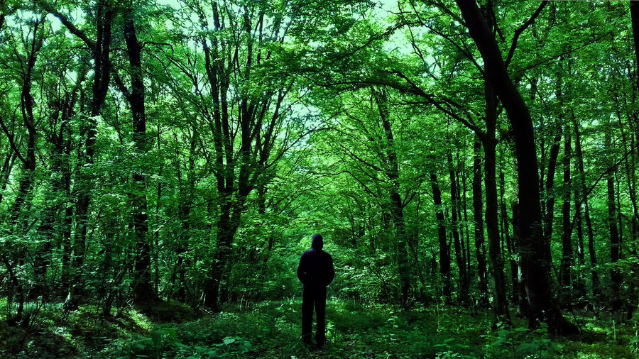 Alone In The Woods Beauty In Nature Forest Green Color Greenery Growth Land Leisure Activity Lifestyles Nature Observing One Person Outdoors Plant Rear View Shielded Shilouette Standing Thats Me  Tranquil Scene Tranquility Tree Tree Trunk Trunk WoodLand