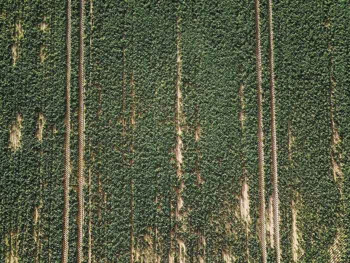 Full frame shot of pine trees in field