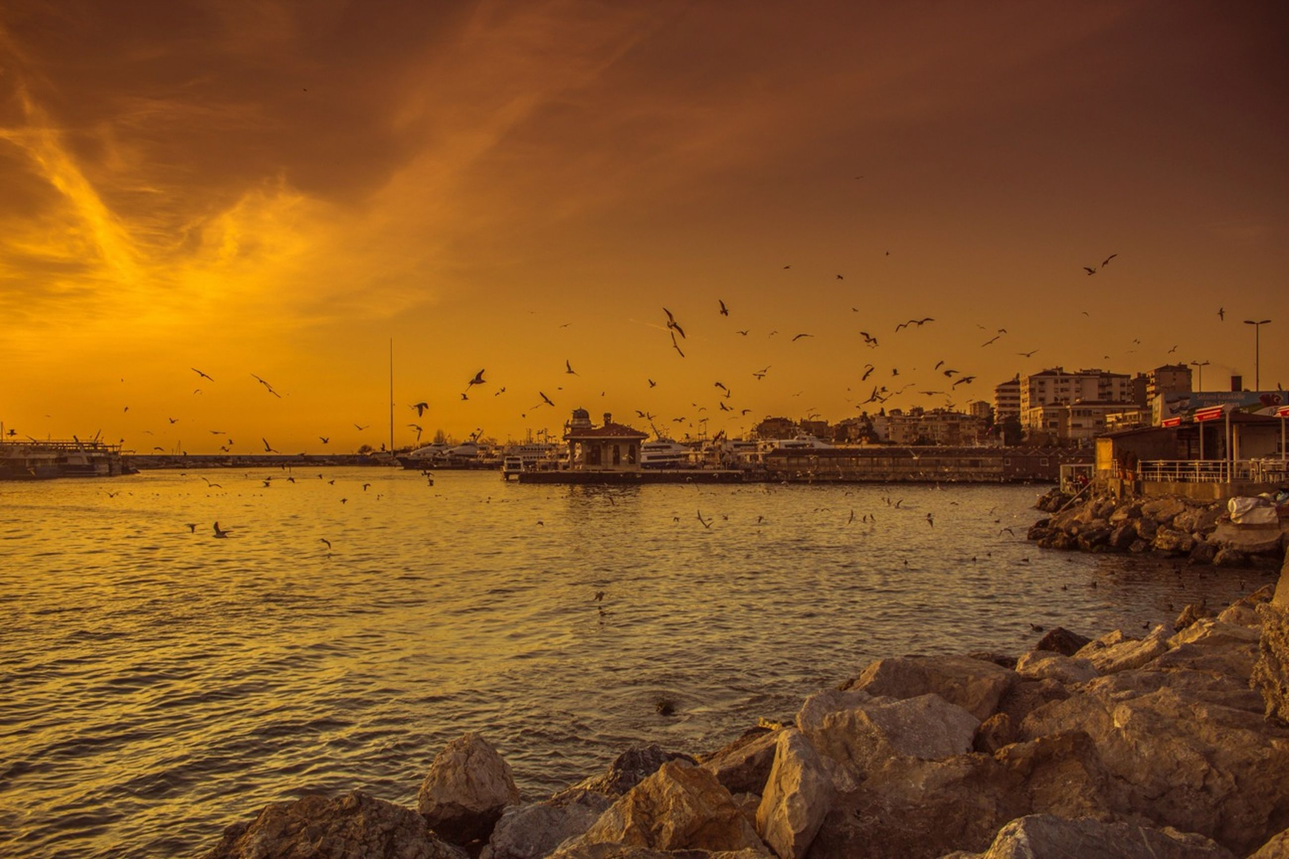 sunset, bird, water, flying, sky, animal themes, orange color, animals in the wild, sea, wildlife, transportation, nautical vessel, scenics, building exterior, beauty in nature, cloud - sky, built structure, nature, silhouette, mode of transport