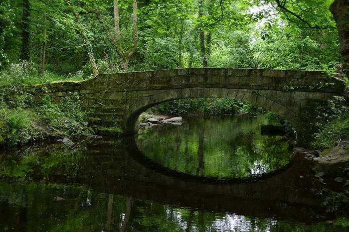 I love this bridge at Rivelin Valley 💚 Tranquil Scene Reflection Water Tree Green Color Outdoors Nature Tranquility No People Beauty In Nature For Anyone Whos Interested Check This Out Nature Beautiful Nature Photography Rural Scene Dayoutwithfriends From My Point Of View Nature_collection Photography Is My Escape From Reality! The Great Outdoors - 2017 EyeEm Awards Scenics Panasonic Lumix Panasonic DMC FZ1000