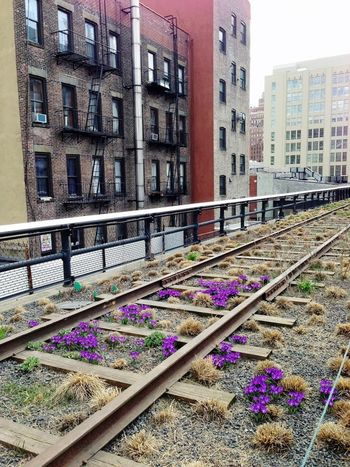 Architecture City City Life Diminishing Perspective Eyeemtravel  Fireescape Flowers Highline IPhoneography Multi Colored New York No People NYC Photography Outdoors Railroad Urban Landscape