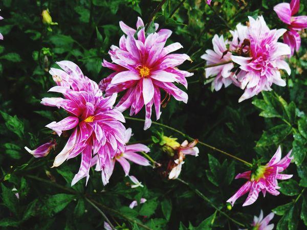 Flowers Garden Garden Photography