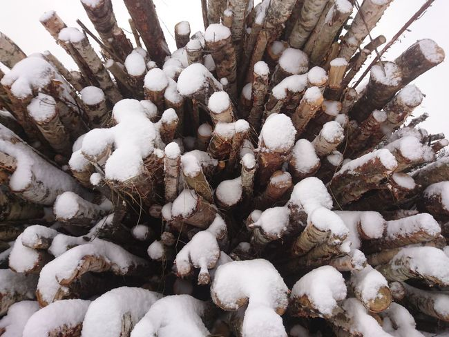 Nature Large Group Of Objects Full Frame Abundance Backgrounds No People Close-up Beauty In Nature Day Outdoors November Hälsingland Norrland Sweden Winterland Winter Snow Cold Temperature Tree Wood