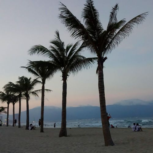 ĐàNẵng Danang Danang, Vietnam Danang City Danangbeach Beach Palm Tree Sand Sea Vacations Landscape Beauty In Nature Outdoors Horizon Over Water Sunset Beach Photography Beach Life Beach View Beach Walk Beachscape My Khe Beach EyeEmNewHere