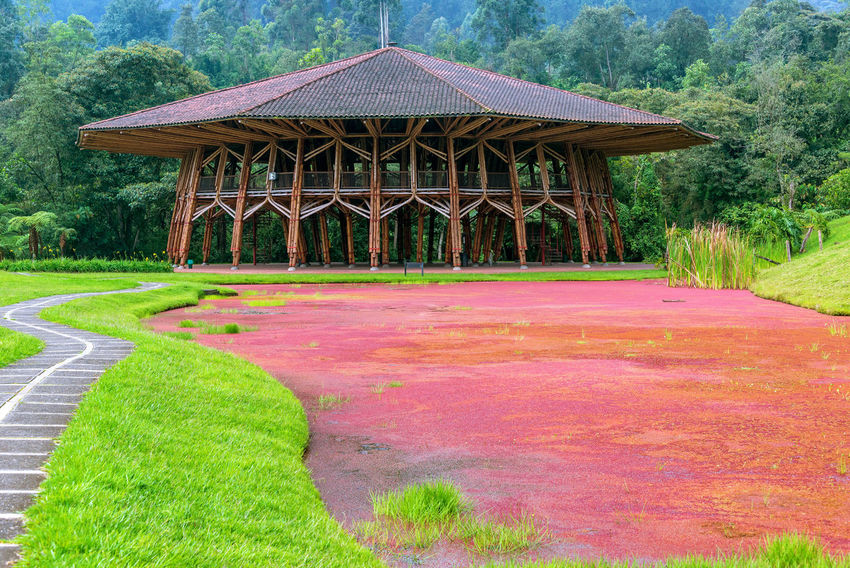 Large wooden building next a to lake covered in red plants near Manizales, Colombia Colombia Green Manizales Pond Red Travel Architecture Beauty In Nature Caldas Coffee Triangle Day Eje Cafetero Lake Landscape Nature No People Outdoors Sky South America Tourism Travel Destinations Tree