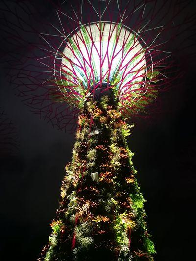 Super Trees Illumination Light Show