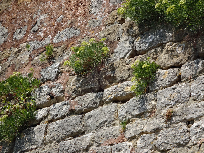 Is there anybody 🐦? Brick Wall Low Angle View Brutpflege Mauer City Life Vogel Bird Bird Photography Tarnung Camouflage Watching Animal Themes Animals In The Wild Animal Wildlife Vigilance  Wall Brickstones Plant Survival Textured  Full Frame Rock - Object Backgrounds Close-up Rugged