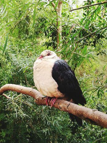 Animal Themes Bird