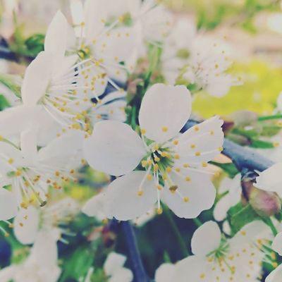 Photo Flowers Nature Art Asuszenfoneselfie