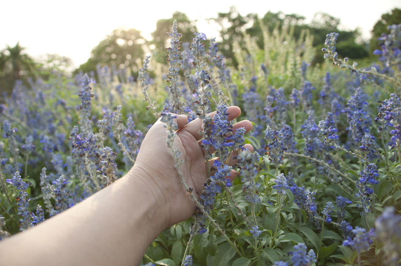 Cropped image of person touching flowers against sky