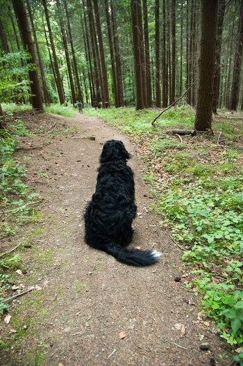 GERMANY🇩🇪DEUTSCHERLAND@ 2008 May Schwarzwald Black Forest Dog Greater Swiss Mountain Dog Nature