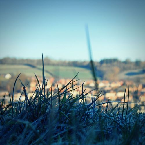 Town through the Blades Of Grass ... Frost Newtown Powys Wales Valley Winter Morning Golden Hour иней