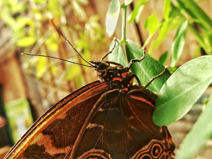 Close-Up Of Brown Butterfly On Leaves