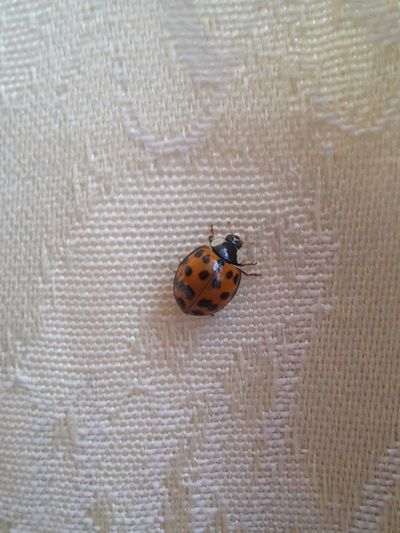 Ladybug Nature Insect Beautiful