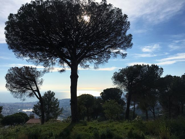 """""""Nice shoot"""" by LB Tree Nature Growth Tree Trunk Beauty In Nature Sky Scenics Tranquility Outdoors Landscape No People Sunday Forest Mar Maresme Alella Day"""