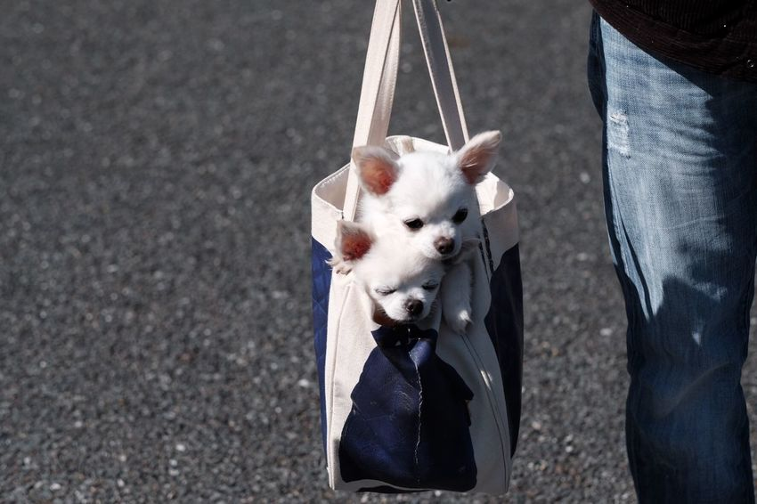 Dog In Bag Dogstagram Domestic Animals High Angle View Mammal One Animal Outdoors
