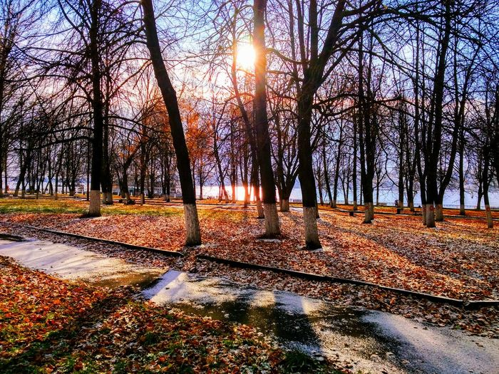 First Snow in the Autumn Park Sunlight Tree Nature No People Outdoors Day Sky Beauty In Nature Autumn Trees Leaves Snow Park Sun First Eyeem Photo