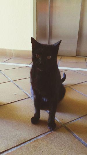 The cat that i met in Spain