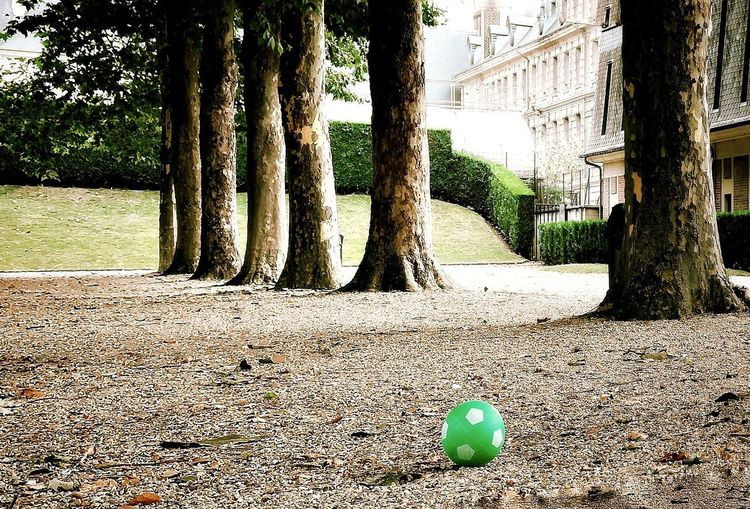 Park - Man Made Space Park Life Toy Lost Toy Streetphotography Boring Urban Football Green Tree Beach Sunlight Growing Fungus Petal Stuffed Toy Stalk