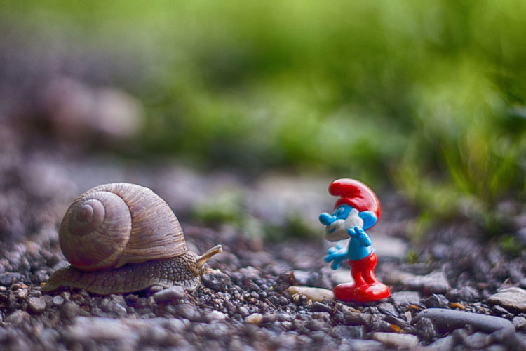 Animal Themes Animals In The Wild Childhood Close-up Day Figurine  Focus On Foreground Gastropod Nature No People One Animal Outdoors Smurf Smurf Style Smurfday Smurfs Smurfs Village Smurfs2 Smurfy Snail Focus On The Story