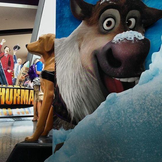 Seeing eye Reindeer Signs Frozen Guidedog Charity Cinema Brisbane