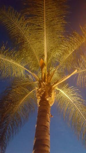 Well Lit Nofilter No People Palm Tree Outdoors Night Illuminated City LosAngelesCity Lookup