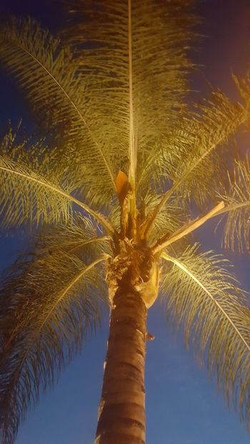 Well Lit Nofilter No People Palm Tree Outdoors Night Illuminated City LosAngelesCity Lookup