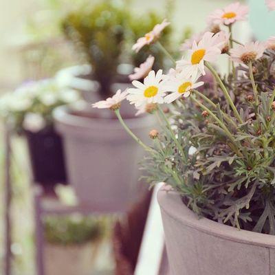 My garden 🌸 Garden Gardenparty Lyon Flowers Sun Spring