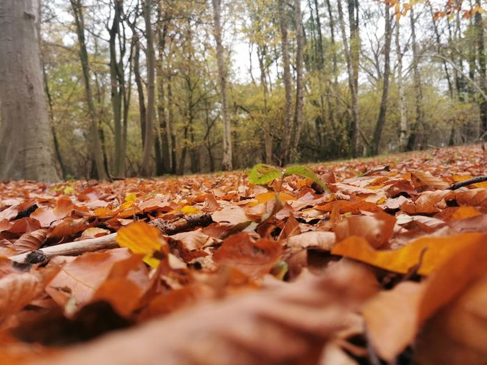 Surface level of dry leaves on land in forest