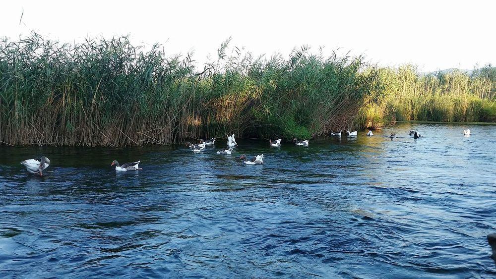 Muğla Akyaka Old Photo Naturel Beauty Hello World Check This Out My Ctiy My Country ın A Photo Green No Edit/no Filter Ducks
