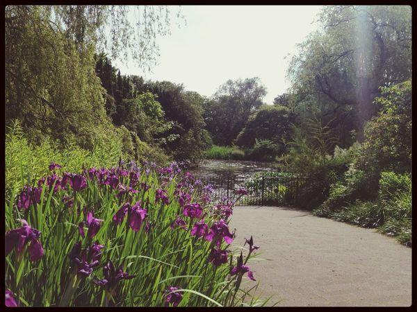 Botanic gardens Edinburgh