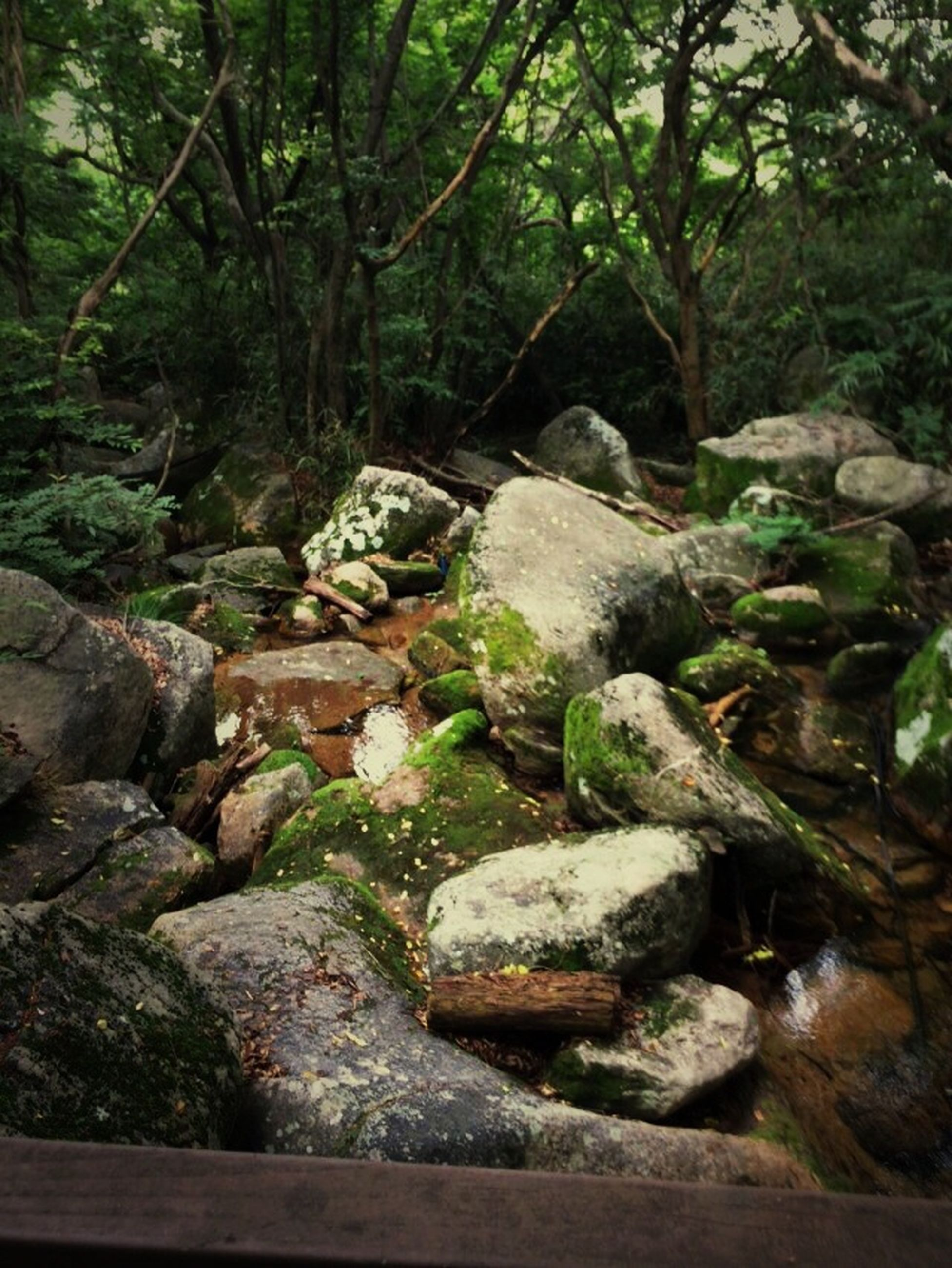 tree, forest, rock - object, tranquility, nature, beauty in nature, green color, growth, tranquil scene, scenics, moss, stream, water, day, non-urban scene, outdoors, tree trunk, no people, rock, plant