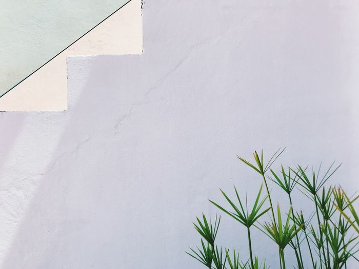 Plant Built Structure Architecture Wall - Building Feature Growth Day White Color Building Exterior No People Nature Green Color Outdoors Copy Space Building Low Angle View Close-up Beauty In Nature Whitewashed Wall Sunlight