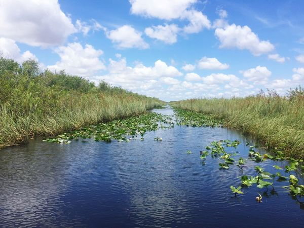Everglades  Water Everglades National Park Plants 🌱 Alligator Warning Clouds And Sky Green Blue Blue Sky White Reflection